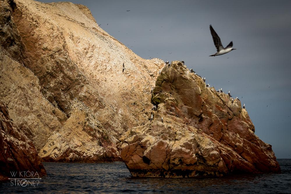 wktorastrone_pl_Peru_Paracas_Islas Ballestas